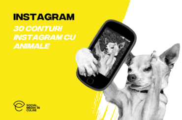 30-conturi-instagram-cu-animale-social-media-in-culise